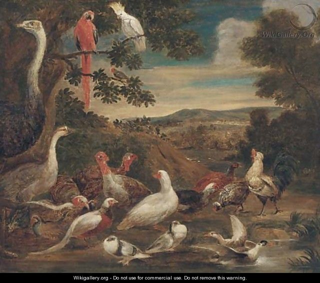 An ostrich, parrots, turkeys, woodcock, a pheasant and other birds in a landscape - (after) Melchior De Hondecoeter