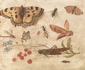 Butterflies, a moth, a cricket, a dragonfly, a beetle and berries - Jan van Kessel