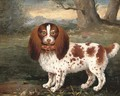 A spaniel in a landscape - George Stubbs