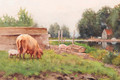 Pigs in a yard - Petrus Paulus Schiedges