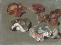 Studies of fungi the lower three are Russula cyanoxantha, 'The Charcoal Burner' - Ferdinand Phillip de Hamilton