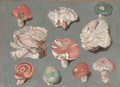 Studies of fungi, including three examples of pinkish-white Bracket fungi (possibly Rigidoperus ulmarius), and edible mushrooms Russula xerampelina - Ferdinand Phillip de Hamilton