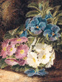 Pansies and Primulas, on a mossy Bank - Oliver Clare