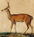 A roebuck, with Vesuvius in the distance - Neapolitan School
