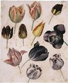Study Of Eleven Tulips - (after) Pierre-Joseph Redoute