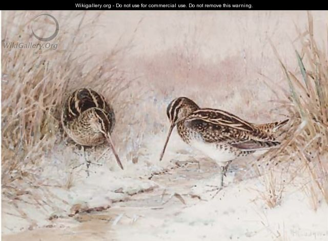 Snipe in snow - William Woodhouse