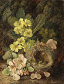 Primroses and bird's nest on a mossy bank - Vincent Clare