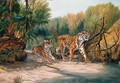 Tigers emerging from the Jungle - Urs Eggenschwiler