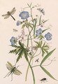 Meadow Crane's-bill, and Wild Pea with dragonflies and a stag beetle - Thomas Robins