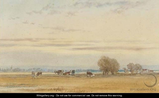 Cattle grazing in the water meadows at sunset - Thomas Lound