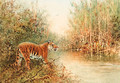 Tiger at the Water's Edge - William Woodhouse