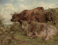Highland cattle - William Huggins