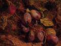 Plums on a mossy bank - William Hughes
