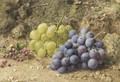 Still-life with white and black grapes and redcurrents - William Henry Hunt