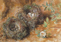Still life with birds' nests - William Henry Hunt