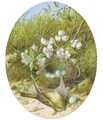 Still life of blossom, a bird and a bird's nest - William Cruickshank