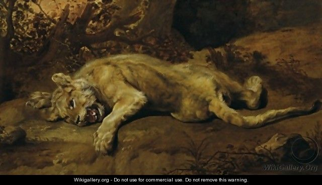 The Lioness - Frans Snyders