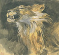 Head of a Lion - Eugene Delacroix