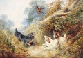 Spaniels flushing out a Pheasant - (after) George Armfield