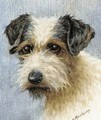 A wire haired terrier - A.C. (after) Cooke
