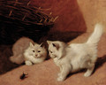 Two white Persian cats with a stag beetle - Arthur Heyer
