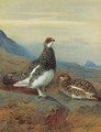 Ptarmigan in summer plumage - Archibald Thorburn