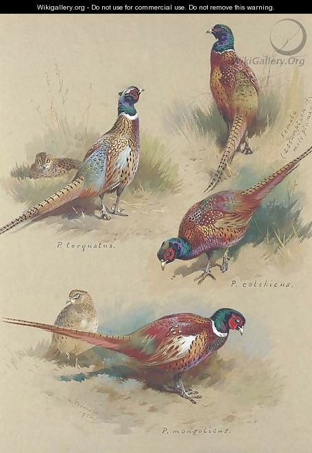 Pheasants - Archibald Thorburn