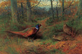 On the ride A cock and two hen pheasant in autumn - Archibald Thorburn