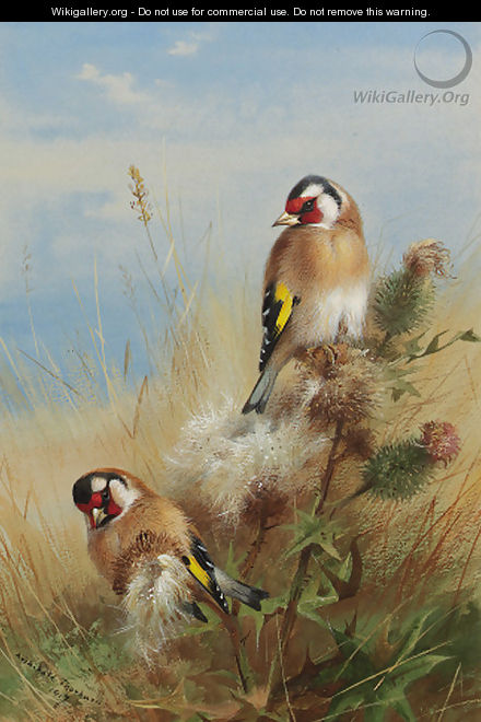 Goldfinches among thistles - Archibald Thorburn