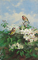 Goldfinches among apple blossom - Archibald Thorburn