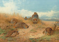 Basking in the noonday Sun A Covey of Grey Partridge - Archibald Thorburn
