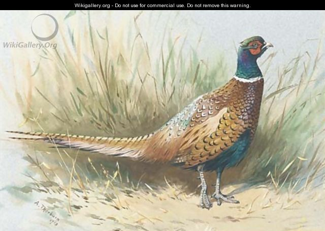 Pheasant Oil Painting By Italian Artist Of The Th Century