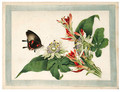 Flower and butterfly - Anglo-Chinese School