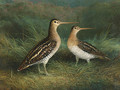 A Pair of Snipe - Abel Hold