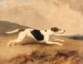 An Old Surrey and Burstow Foxhound - Abraham Cooper