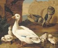 A duck with ducklings, pigeons and swifts before a ruined wall - (after) Jacob Bogdani
