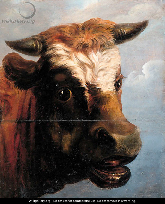 Head of a bull - (after) Jacob Van Strij