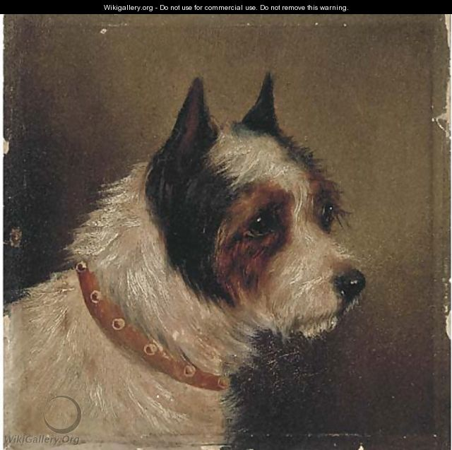 The head of a terrier - (after) George Armfield