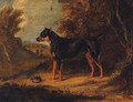 A Black And Tan Terrier - (after) Ramsay Richard Reinagle