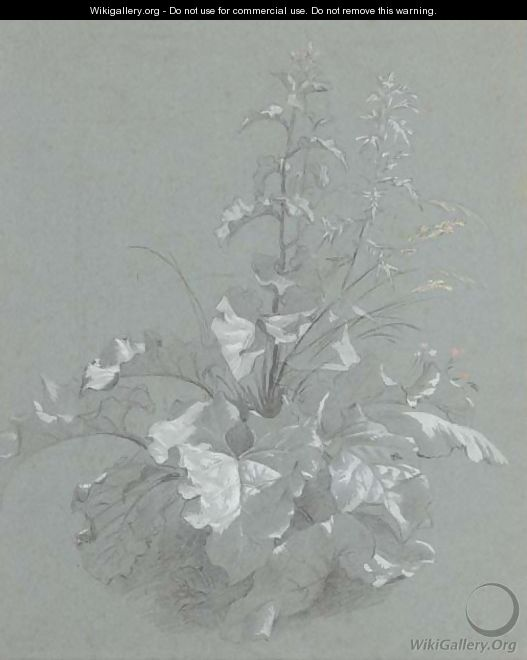 Study of wild flowers - (after) Jan The Younger Weenix
