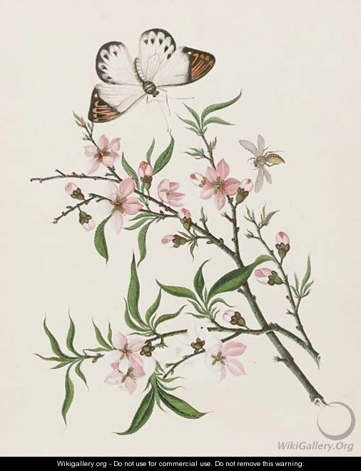 Cherry flowers and a butterfly - Chinese School ...