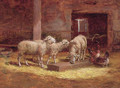Sheep and chickens in a barn - Charles Clair