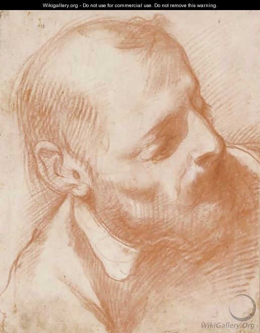 Head of a bearded man turned to the right - Florentine School