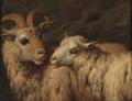 A Ram and a Ewe - (after) Adriaen Van De Velde