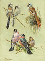 Bird Studies - Fidelia Bridges