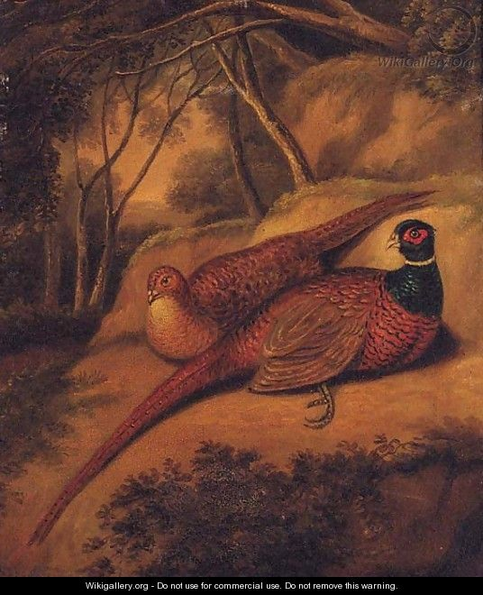 A Cock and Hen Pheasant in a wooded Landscape - English School