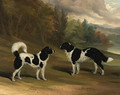 Nero and Marquis, two Landseer newfoundlands, in a wooded lake landscape - David of York Dalby