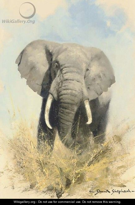 Charging elephant - Thomas Hosmer Shepherd