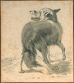Study of a wolf, seen from behind - Cornelis Saftleven