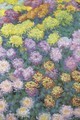 Massif de chrysanthemes - Claude Oscar Monet